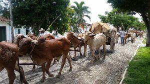 Geladinho em Goiás: boiada em Pirenópolis